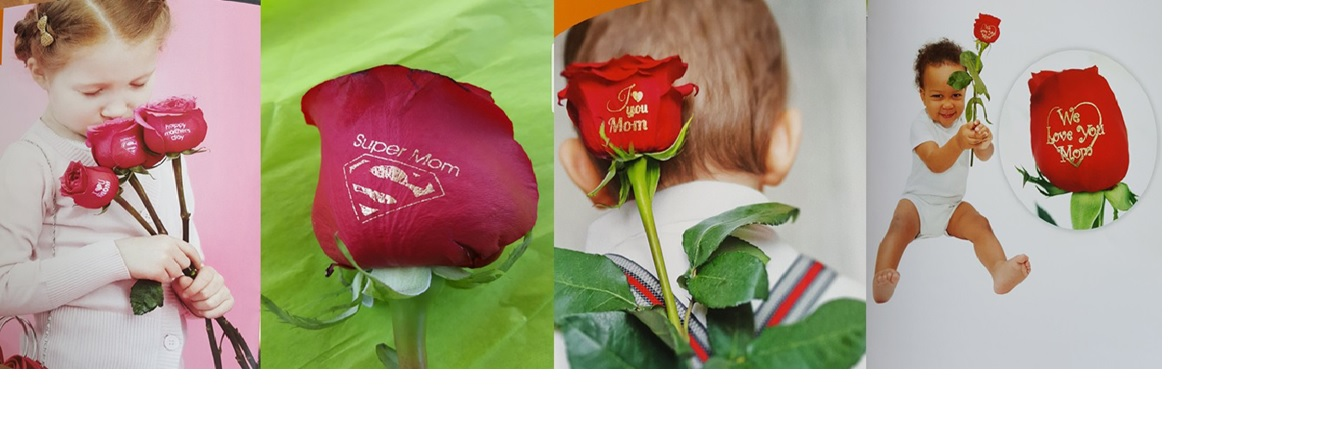 Speaking Florals An official representative of Speaking Roses International